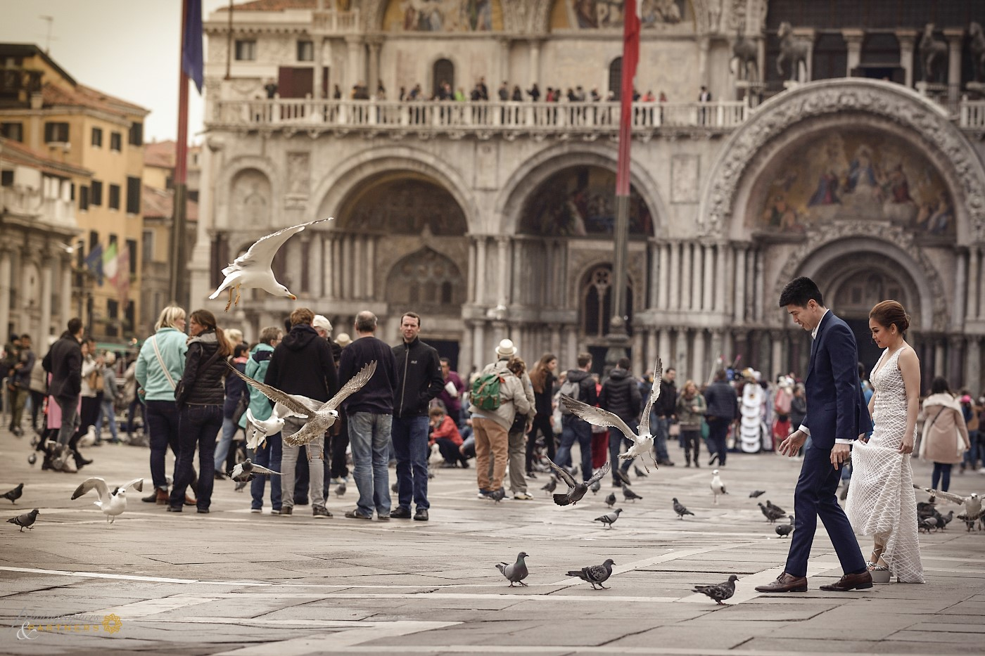 Crossing Piazza San Marco between pigeons and seagulls 🍃